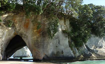 Day tour to Coromandel from Auckland